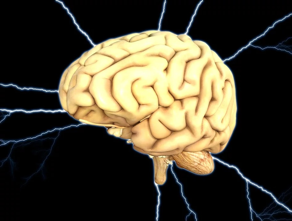 The brain is one of the main organs of awareness