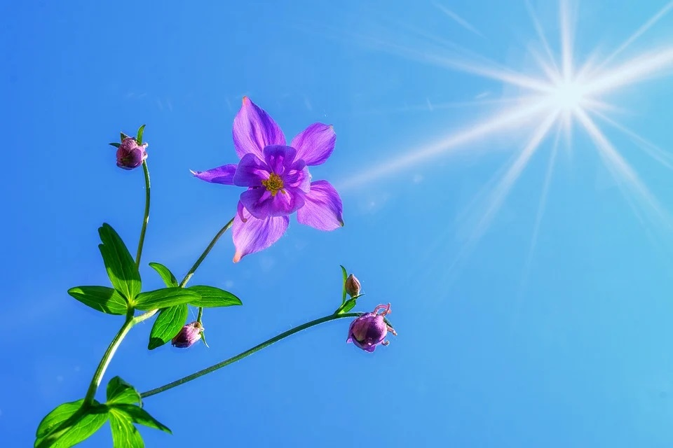Like a flower gaining energy from the sun, the ego is powered by your attention